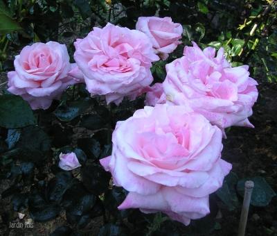 Carolе Bouquet