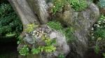 растения на дереве