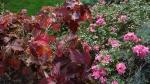 горта дуболистная и миниатюрные розы