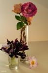 Цветы января