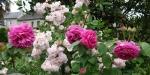 Parfum D'Evita