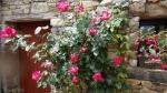 rosier Gojard
