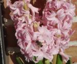Декабрьская пчёлка