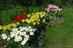 Tюльпаны  :: бордюр из тюльпанов