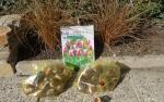 Лилиецветные тюльпаны Клавдия
