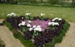 Tюльпаны  :: Mount Tacoma