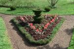 Topiary :: Вазон из Lonicera nitida.Весна  2010
