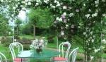 Беседка - павильон с розами Mme Aldred Carriere