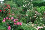 Центральный розарий