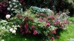 Розы и гортензии